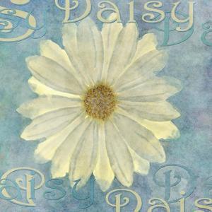 Daisy by Cora Niele