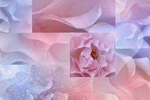 Daydream I by Cora Niele