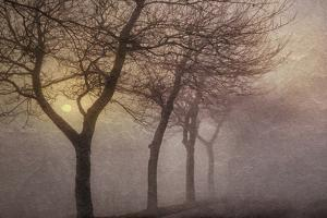 Early Morning by Cora Niele