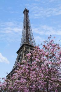 Eiffel Tower with Pink Magnolia Tree by Cora Niele