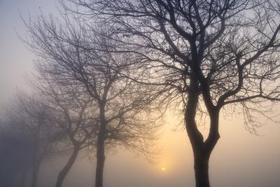 Hazy Sunrise with Tree Tree Silhouettes