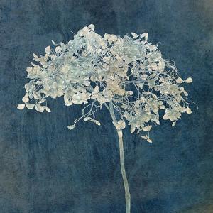 Hortensia Silhouette Sapphire by Cora Niele