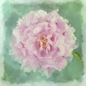 Peony Pink by Cora Niele