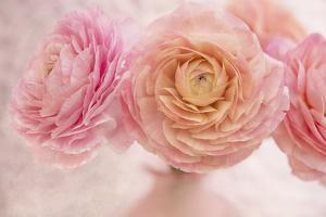 Pink Persian Buttercup Bouquet by Cora Niele