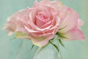 Pink Roses by Cora Niele