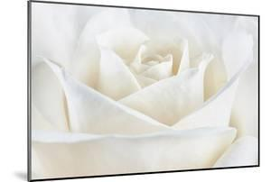 Pure White Rose by Cora Niele
