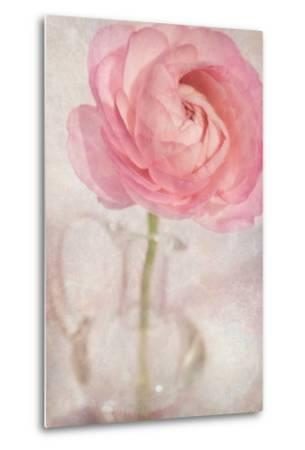 Single Rose Pink Flower