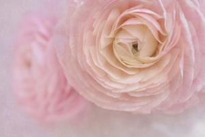 Soft Pink Flower Bouquet by Cora Niele