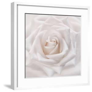 Soft White Rose by Cora Niele