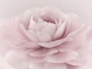 Stylisch Rose Pink by Cora Niele