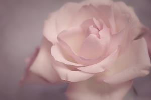 Tenderness by Cora Niele