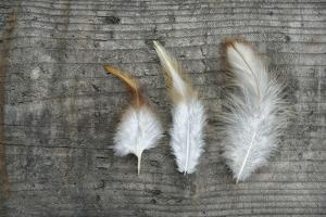 Three Feathers on Wood by Cora Niele