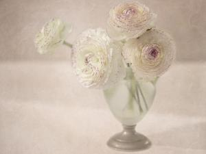 White Persian Buttercups Posy by Cora Niele