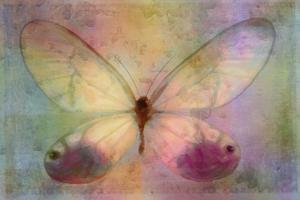 Yellow Butterfly Watercolor by Cora Niele