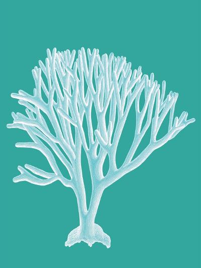 Coral 2 White on Turquoise-Fab Funky-Art Print