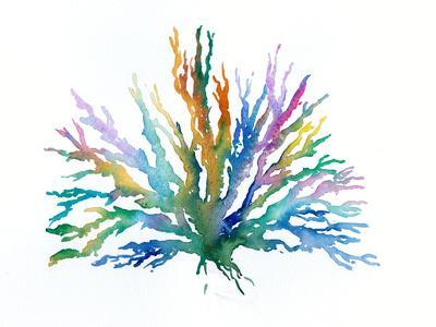 https://imgc.artprintimages.com/img/print/coral-2_u-l-f994uj0.jpg?p=0