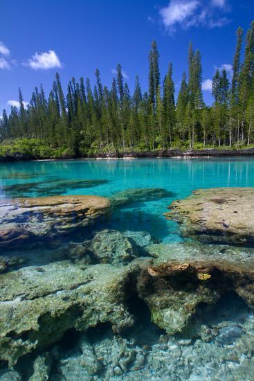 Coral and Crystal Water-Mako photo-Photographic Print