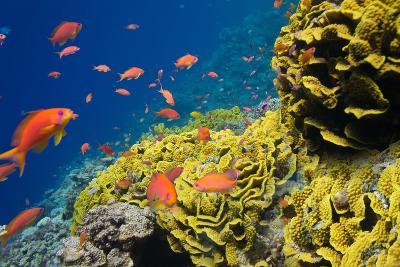 Coral and Fish in the Red Sea.Egypt-Irochka-Photographic Print