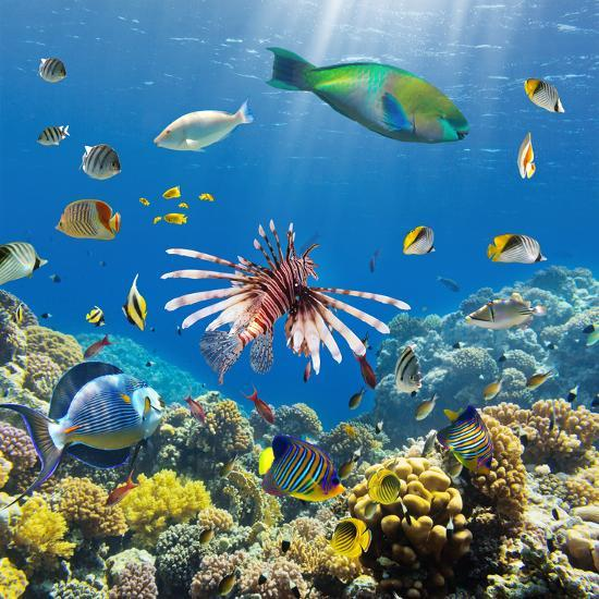Coral and Fish in the Red Sea Egypt Photographic Print by Irochka   Art com