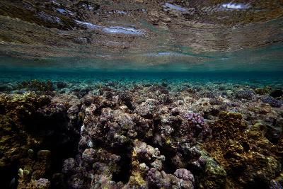 Coral and Other Marine Life in a Fringe Reef on Ant Atoll-Luis Lamar-Photographic Print