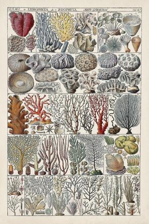 https://imgc.artprintimages.com/img/print/coral-chart_u-l-q1gwd7d0.jpg?p=0