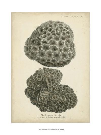 Coral Collection V-Johann Esper-Art Print