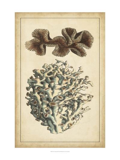 Coral Companions II-Vision Studio-Art Print