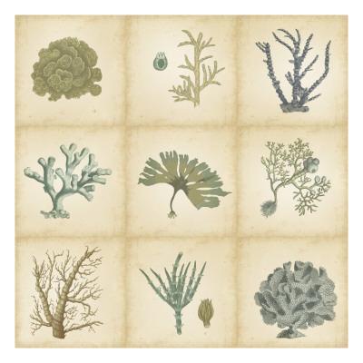 Coral Curio-Vision Studio-Art Print