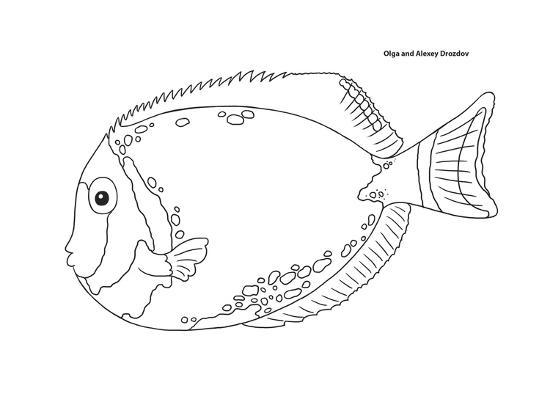 Coral Fish 5-Olga And Alexey Drozdov-Giclee Print