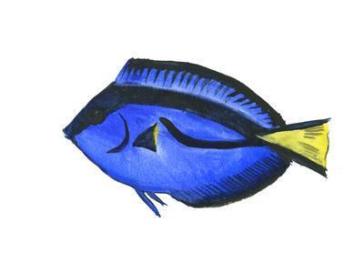 https://imgc.artprintimages.com/img/print/coral-fish-angelfish-suren-1_u-l-f94rjl0.jpg?p=0
