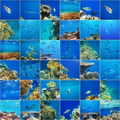 Coral Fish in  Red Sea,Egypt-Andrushko Galyna-Photographic Print