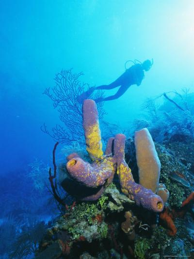 Coral Formations and Underwater Diver, Cozumel Island, Caribbean Sea, Mexico-Gavin Hellier-Photographic Print