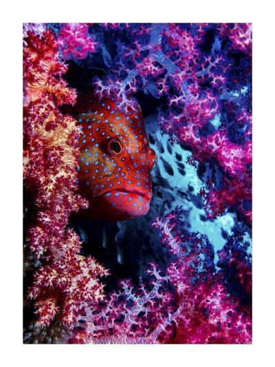 Coral Hind-Dani Barchana-Giclee Print