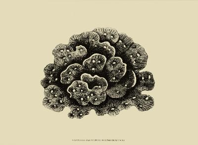 Coral on Khaki I-J^ Wilkes-Art Print