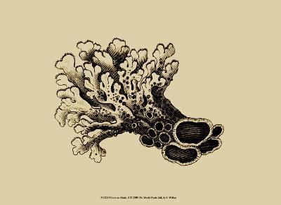 Coral on Khaki II-J^ Wilkes-Art Print