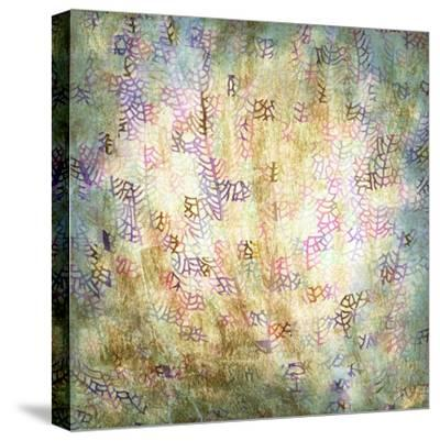 Coral Party II-Studio W-Stretched Canvas Print