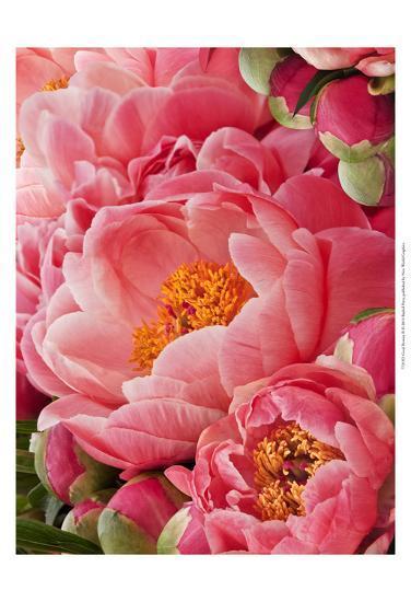 Coral Peonies II-Rachel Perry-Art Print