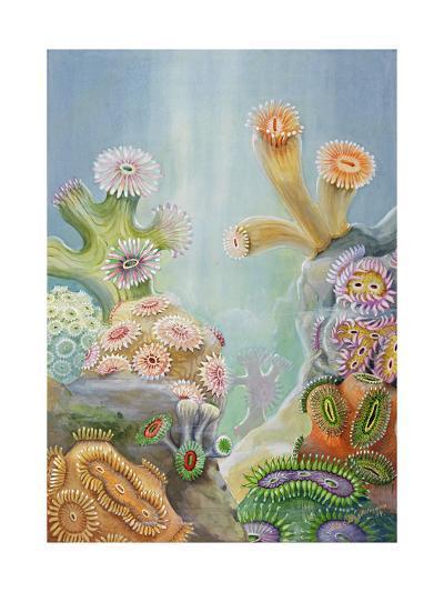 Coral Polyps Reproduce by Splitting in Half-Else Bostelmann-Giclee Print