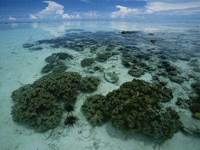Coral Reef at Low Tide off of Kapalai Island-Tim Laman-Photographic Print