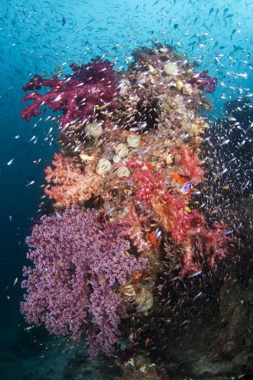 Coral Reef Community-Matthew Oldfield-Photographic Print