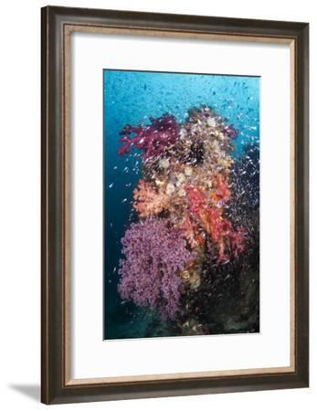 Coral Reef Community-Matthew Oldfield-Framed Photographic Print