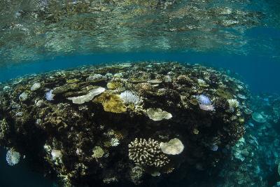 Coral Reef Diversity, Fiji-Pete Oxford-Photographic Print
