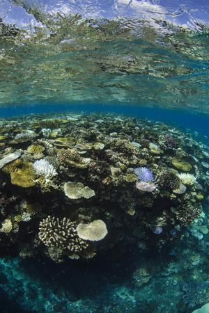 Coral Reef Diversity, Fiji-Pete Oxford-Photographic Print