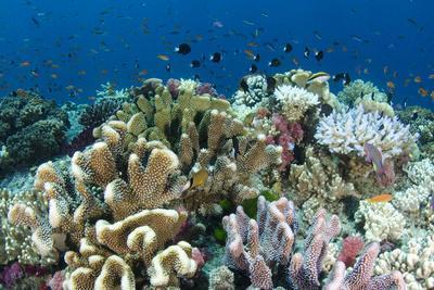 https://imgc.artprintimages.com/img/print/coral-reef-diversity-fiji_u-l-pyqpes0.jpg?p=0