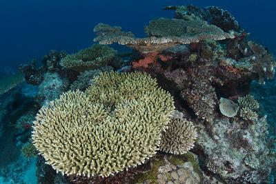 Coral Reef Diversity, Rainbow Reef, Fiji-Pete Oxford-Photographic Print