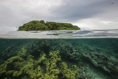 Coral Reef on the Mosquitia Coast-Cristina Mittermeier-Photographic Print
