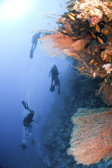 Coral Reef Red Sea, Ras Mohammed--Photographic Print