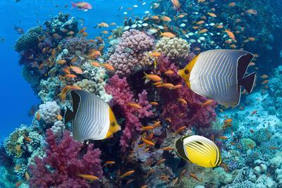 https://imgc.artprintimages.com/img/print/coral-reef-scenery-with-fish_u-l-q10cvqe0.jpg?p=0