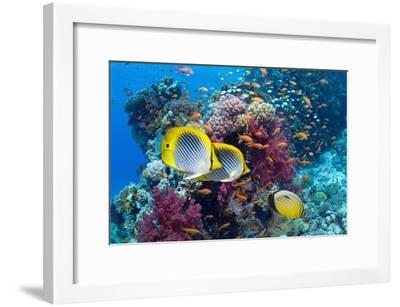 Coral Reef Scenery with Fish-Georgette Douwma-Framed Photographic Print