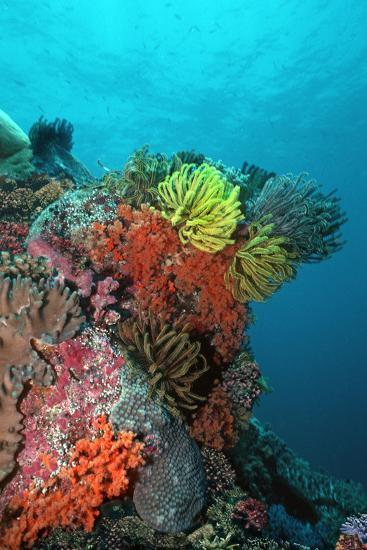 My Coral Account